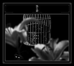 黒と影 (CD+DVD) (初回生産限定盤)