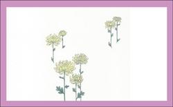 エレガント掛け紙(菊・弔事用)大 200枚
